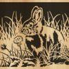 048-rabbit