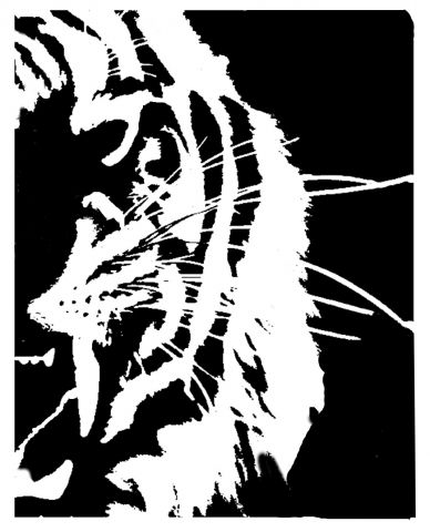 tiger face (right Side ) 2of 2