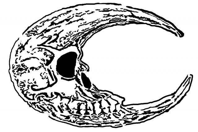 Moon skull 2