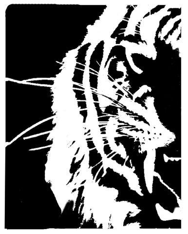 Tiger face (left side) 1of 2